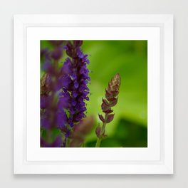 Purple Sage Framed Art Print