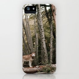Husky in Forest iPhone Case