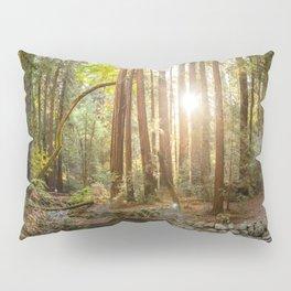 Morning Sun at Muir Woods Pillow Sham