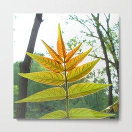 Watercolor Bush, Part, Staghorn Sumac 02, Eno River, North Carolina Metal Print