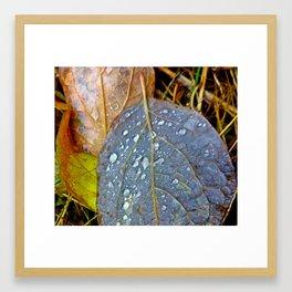 Deep Thoughts on Leaf Dew Framed Art Print