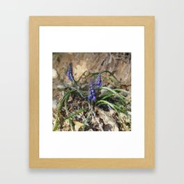 Happy Hyacinth Framed Art Print