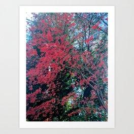 Japanese Maple on Ivy Art Print