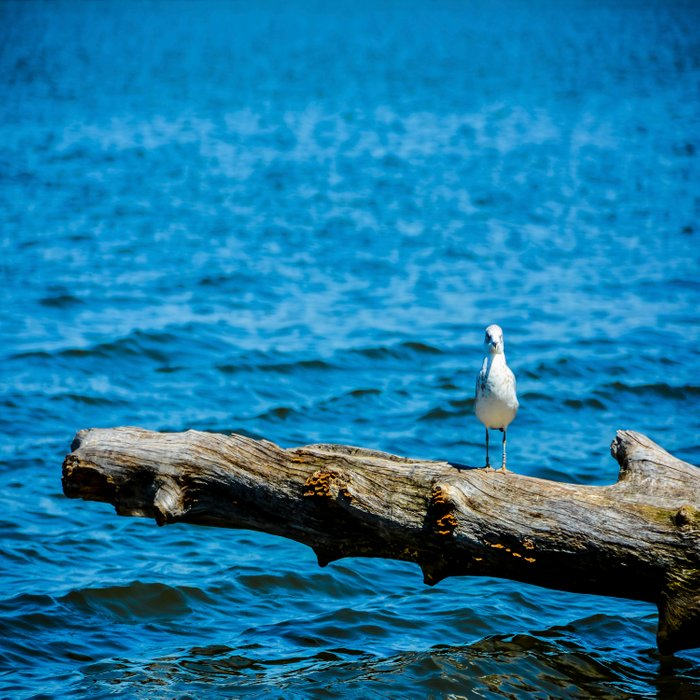 Seagull on Driftwood Comforters
