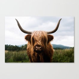 Scottish Highland Cattle in Scotland Portrait II Canvas Print