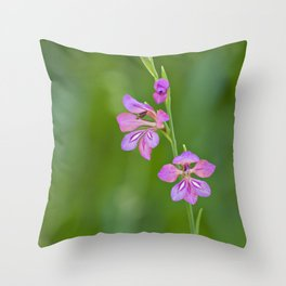 Beauty in nature, wildflower Gladiolus illyricus Throw Pillow