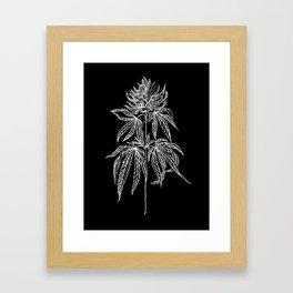 Reverse Cannabis Illustration Framed Art Print