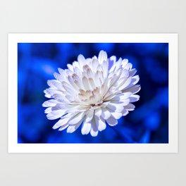 Snow White Petals Art Print