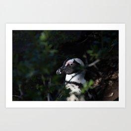 Portrait of a Penguin Art Print