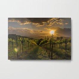 Vineyard Sunset, Tuscany, Italy Metal Print