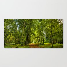 Woodland Pathway Canvas Print