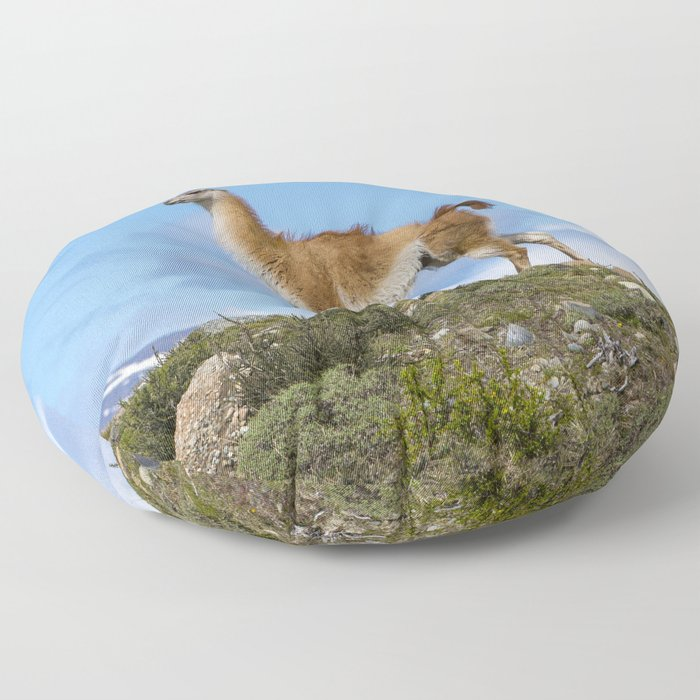 A Guanaco, in Patagonia, Chile. Floor Pillow