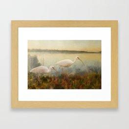 North Carolina Ibis Framed Art Print