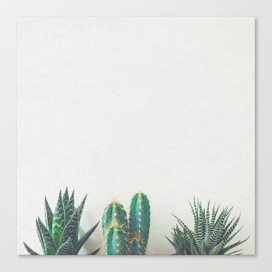 Cactus & Succulents II Canvas Print
