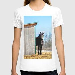 Percheron Horse by Teresa Thompson T-shirt