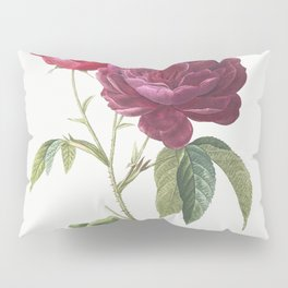 Purple French Rose, Rosa gallica purpuro-violacea magna from Les Roses (1817-1824) by Pierre-Joseph Redoute Pillow Sham