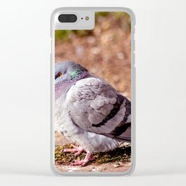 Concept nature : The watchful dove Clear iPhone Case