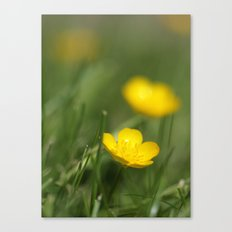 Buttercup Blur Canvas Print