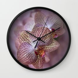 Blooming orchids Wall Clock