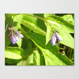 Flight of the Bumblebee  Canvas Print