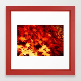 Magnificent Maple Framed Art Print