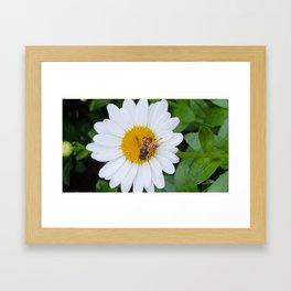 Bee on Daisy Framed Art Print