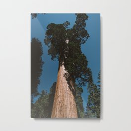 Sequoia National Park VII Metal Print