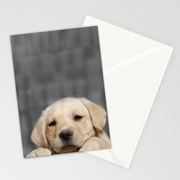 A dog in Bag Stationery Cards