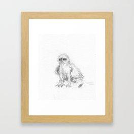 Baby Gryphon Framed Art Print
