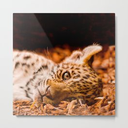 Jaguar Cub Lying in Foliage Metal Print