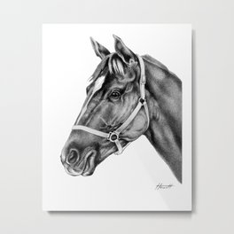Affirmed (US) Thoroughbred Stallion Metal Print