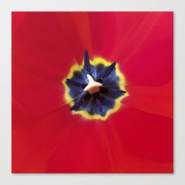 Seeing red (at tulip time) Canvas Print