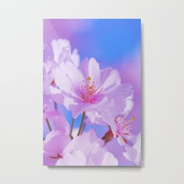 Spring 288 sakura Metal Print