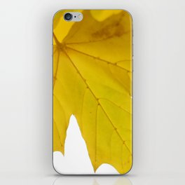 Yellow maple leaf. iPhone Skin