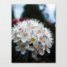 Cedar Point Floral Canvas Print