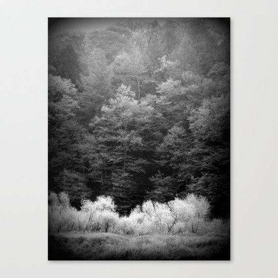 The Forest Keeps Secrets Canvas Print