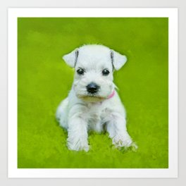White Schnauzer Puppy Art Print