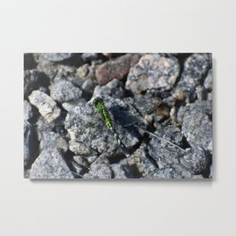 Bartender, dragonfly on the rocks please. Metal Print