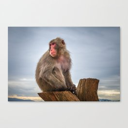 Japanese macaque on a trunk, Iwatayama monkey park, Kyoto, Japan Canvas Print