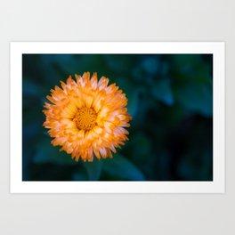 Yellow and Orange Calendula officinalis Oopsy Daisy Flower Art Print