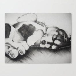 Upside down pup Canvas Print
