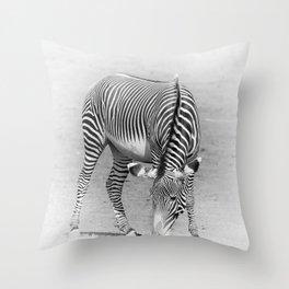 Hungry Zebra Throw Pillow