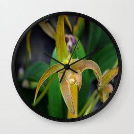 Golden Epidendrum Wall Clock