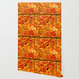 Sugar Maple Leaves in the Fall Light Wallpaper