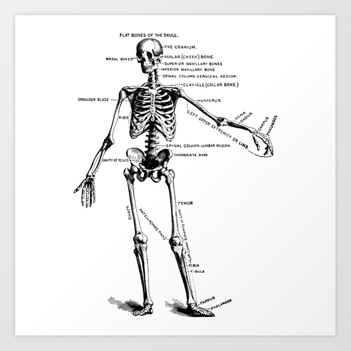 Human Skeleton Anatomy Drawing Diagram Art Print By Azza1070 Society6