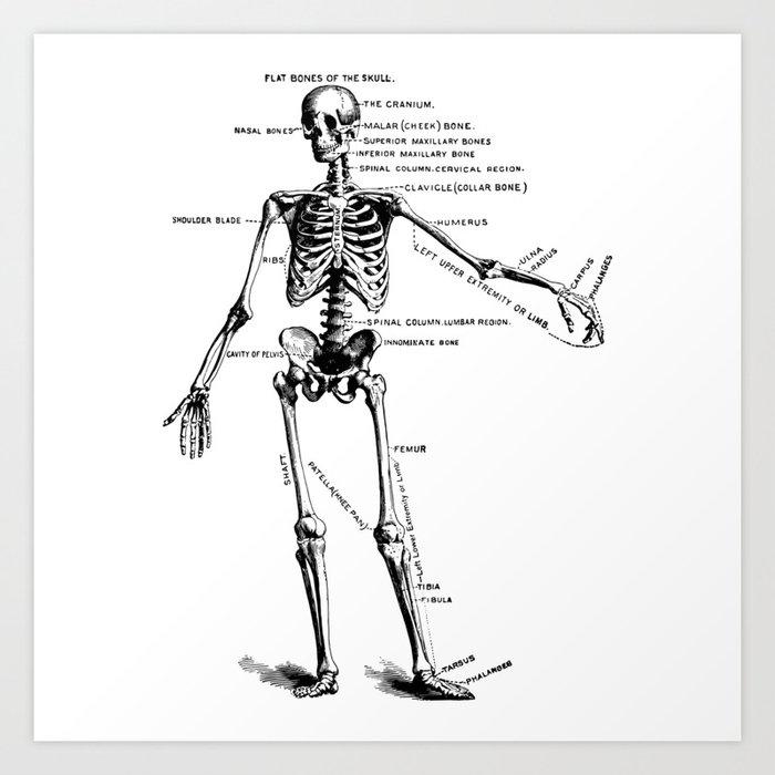 Skeleton Drawing Diagram - Car Wiring Diagrams Explained •
