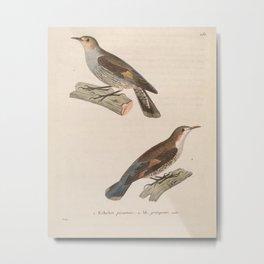 Brown Treecreeper climacteris scandens3 Metal Print