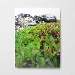 Up on the mountain Metal Print