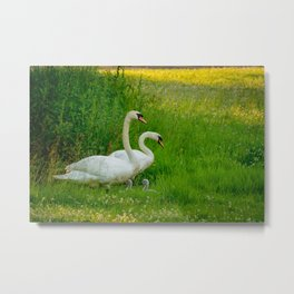 Swans Family Metal Print