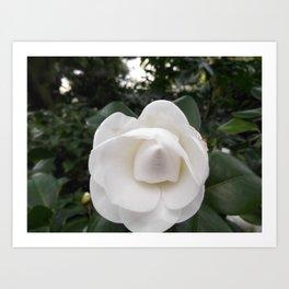 10005 Magnolia Art Print